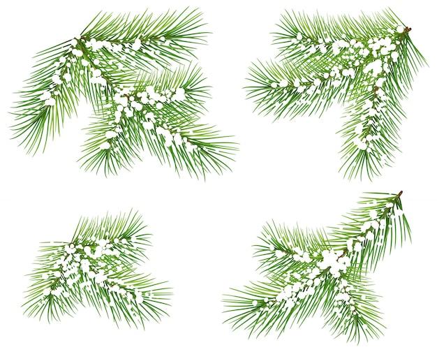 Metta il ramo del pino verde isolato su bianco. ramo di abete sotto la neve