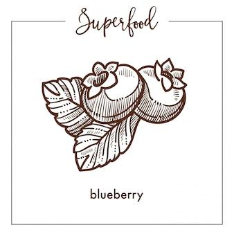 Mirtillo dolce maturo con schizzo di superfood monocromatico di foglie