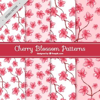 Modelli acquerello di fiori di ciliegio