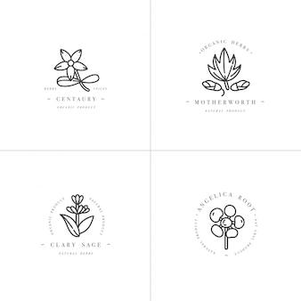 Modelli di design set monocromatico - erbe e spezie sane. diverse piante medicinali, piante secolari, salvia sclarea, madreperla e radice di angelica. loghi in stile lineare alla moda.
