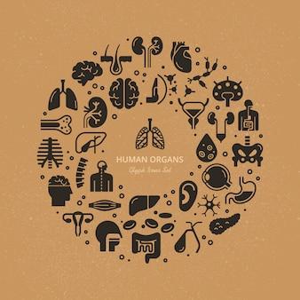 Modello circolare di icone lineari di organi interni umani e scheletro su un tema medico.