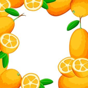 Modello colorato. kumquat di frutta esotica con foglie verdi. frutta fresca . illustrazione su sfondo bianco. kumquat intero e tagliato con succo d'arancia.