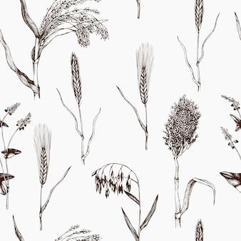 Modello con colture di cereali disegnati a mano. sfondo di piante agricole