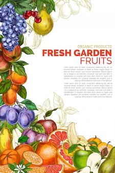 Modello del manifesto di frutti giardino verticale