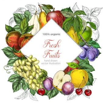 Modello della bandiera di rombo di frutta