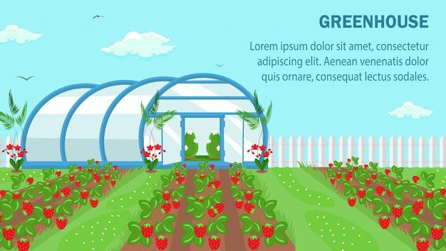 Modello della bandiera di web di coltivazione di frutta organica
