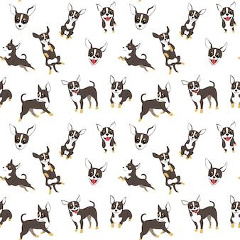 Modello della chihuahua, pose del cane, razza del cane, modello senza cuciture