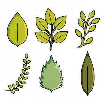 Modello della natura del giardino delle piante delle foglie