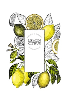 Modello di cornice di albero di limone. illustrazione di frutta disegnata a mano banner in stile inciso. agrumi vintage