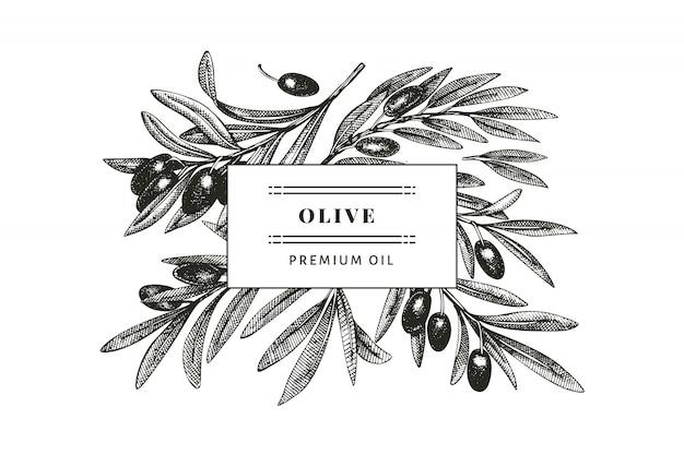 Modello di disegno di rami di ulivo. pianta mediterranea in stile inciso. foto botanica retrò.