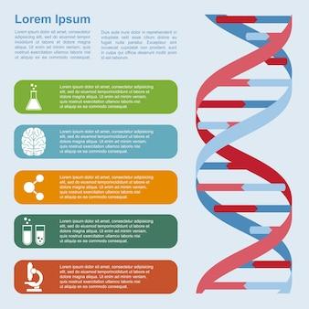Modello di infografica con struttura del dna e icone, concetto di ricerca, sviluppo, scienza e biotecnologia