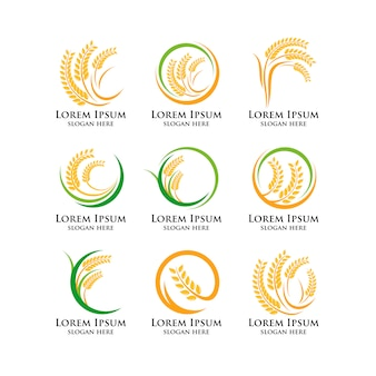 Modello di logo di grano agricoltura