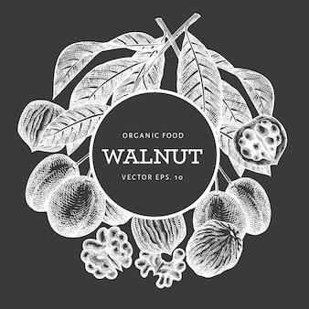 Modello di noce schizzo disegnato a mano illustrazione di alimenti biologici a bordo di gesso. illustrazione di dado vintage. sfondo botanico stile inciso.