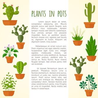 Modello di pagina di casa pianta e cactus brochure.