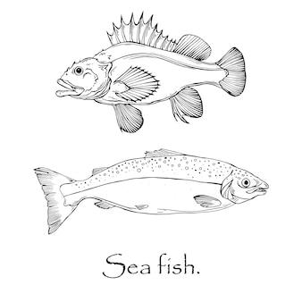 Modello in bianco e nero di vettore di pesci marini, branzino e salmone