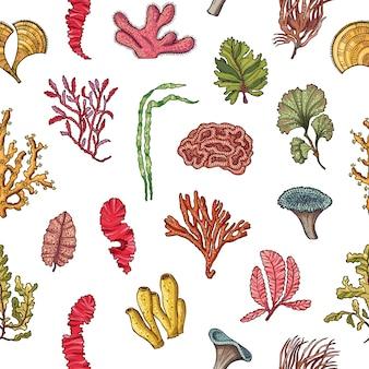 Modello o illustrazione disegnato a mano degli elementi dell'alga