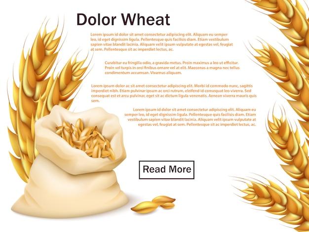 Modello pubblicitario realistico di grano, cereali e orecchie