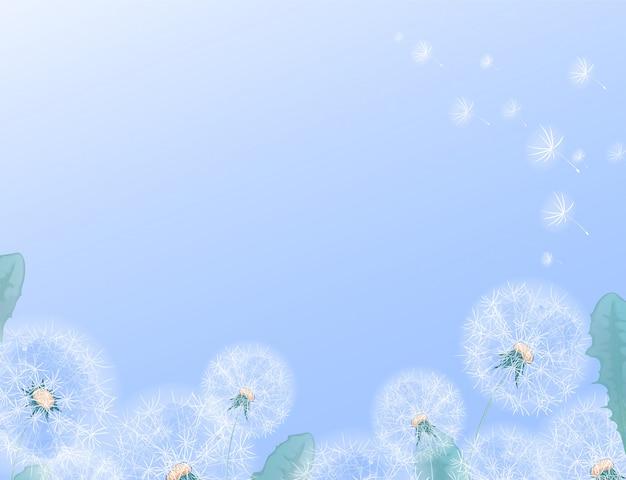 Modello rettangolare orizzontale con denti di leone bianchi sul bordo inferiore. cornice per testo o foto con un bordo floreale estivo su uno sfondo sfumato.