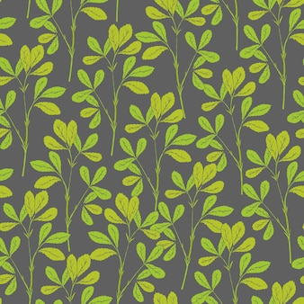 Modello senza cuciture botanico con steli e foglie di fieno greco su grigio