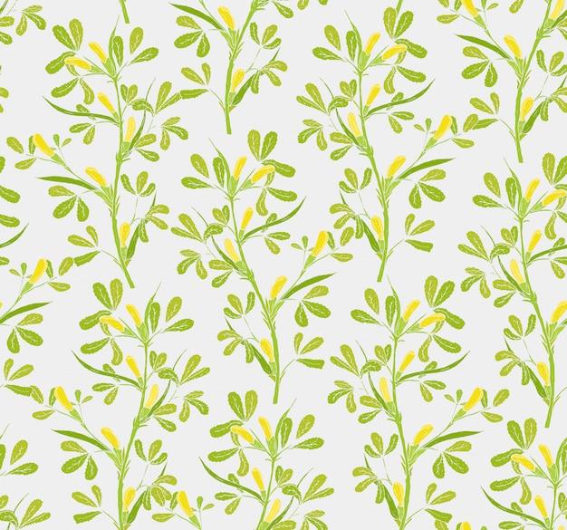 Modello senza cuciture floreale con le piante di fioritura del fieno greco su fondo bianco.