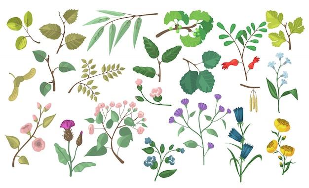 Moderni elementi floreali e botanici piatti vettoriali