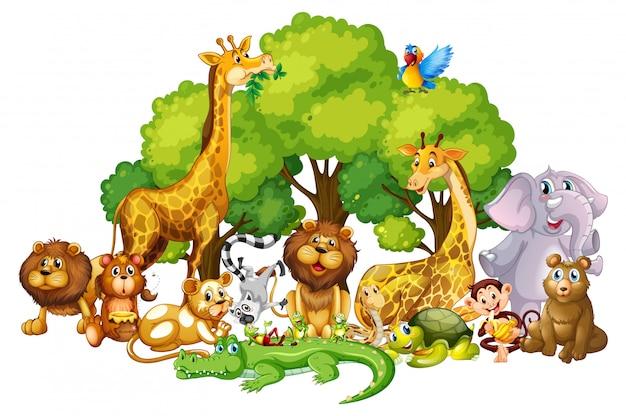 Molte cutes nel parco