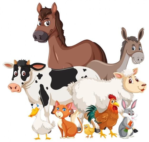 Molti animali da allevamento su sfondo bianco