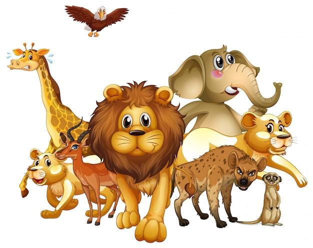 Molti animali su sfondo bianco