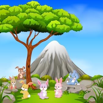 Molti conigli seduti sulla roccia con la montagna