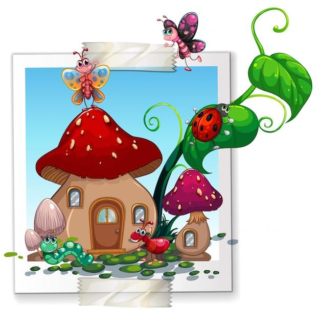Molti insetti nella casa dei funghi