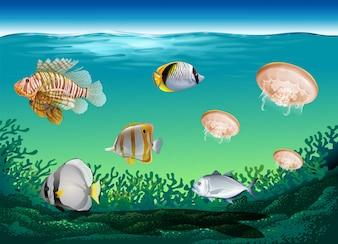 Molti pesci nuotano sotto l'oceano