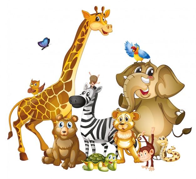 Molti simpatici animali su sfondo bianco