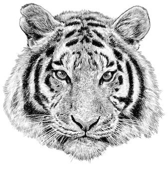 Monocromio di schizzo di tiraggio della mano della testa della tigre su fondo bianco.