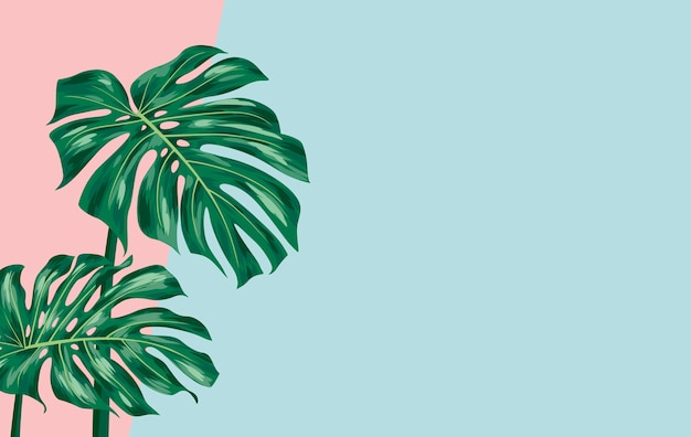 Monstera deliciosa su sfondo di carta colorata con copyspace