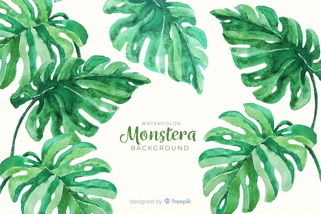 Monstera se ne va