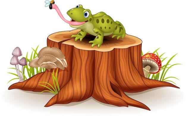 Mosca di cattura della rana sveglia sul ceppo di albero