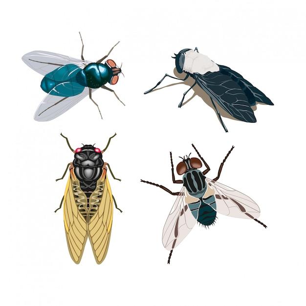 Mosche degli insetti