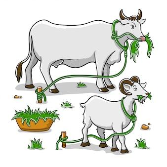 Mucca e capra