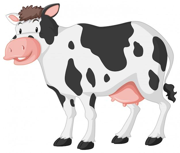 Mucca sveglia con il grande sorriso su bianco