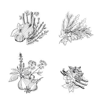 Mucchi delle erbe e delle spezie disegnati a mano di vettore messi
