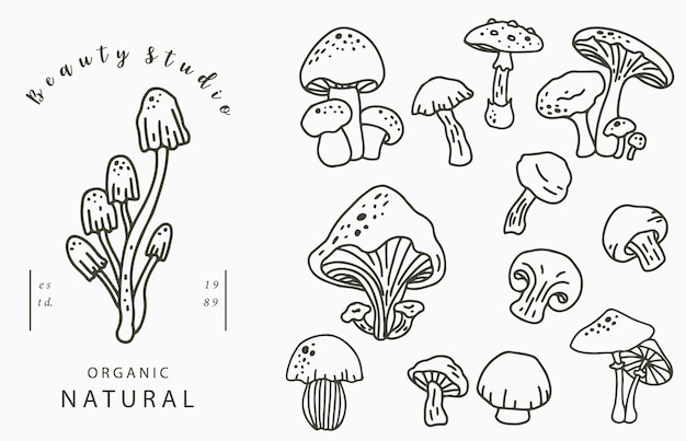 Mushroon collection logo con shimeji, shiitake. illustrazione vettoriale per icona, logo, adesivo, stampabile e tatuaggio