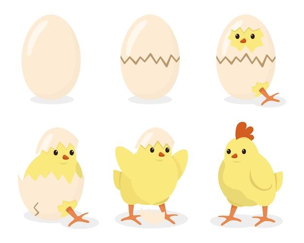 Nascita di un pollo, uovo rotto