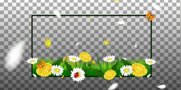 Natura primaverile o estiva. fiori ed erba su sfondo trasparente per la decorazione