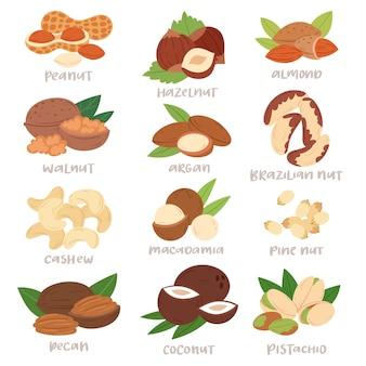 Noce guscio di nocciole o noci e mandorle noci impostare la nutrizione con anacardi arachidi e castagne noce moscata illustrazione isolato su sfondo bianco