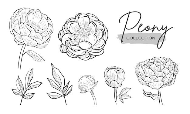 Nozze dell'ornamento di saluti di stile del disegno della mano del fiore della peonia