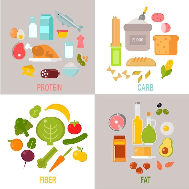 Nutrizione sana, proteine equilibrate carboidrati vettore dieta equilibrata