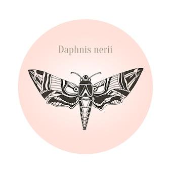 Oleanda falco falena arte tatuaggio. daphnis nerii. illustrazione vettoriale.