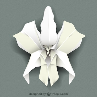 Orchidea bianca vettore