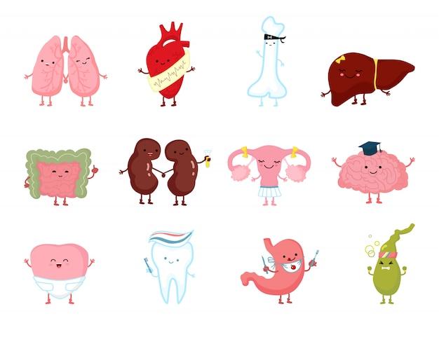 Organi umani di salute della medicina con il sorriso nell'anatomia disegnata a mano del carattere sano isolata su bianco.