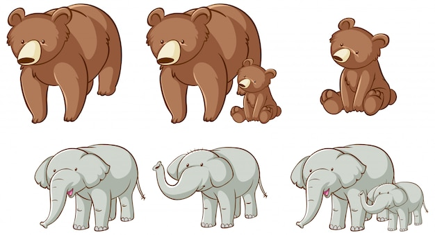 Orsi ed elefanti isolati